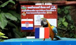 """ชัวร์ไม่ชัวร์? """"เจอาร์"""" นกแก้วเขาเขียวทายผลบอลโลก ฟันธงฝรั่งเศสแชมป์แน่นอน"""