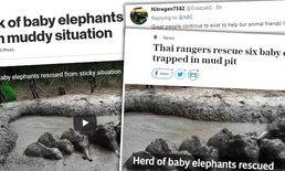 ส่องคอมเมนท์ชาวโลก น้ำตาปริ่มวินาทีเจ้าหน้าที่ไทยช่วย 6 ลูกช้างตกบ่อโคลน
