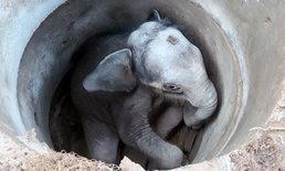 ลูกช้างป่าตกบ่อเกรอะ-โขลงช้างอาละวาดหนักก่อน จนท.เข้าช่วยเหลือ
