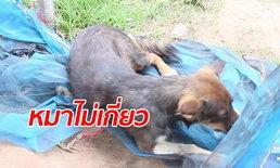 ไขปริศนา หญิงสูงวัยตายหลังเป่าคาถารักษาหมากัด ญาติงงข่าวลือเป็นตุเป็นตะ
