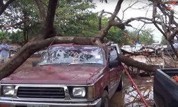 เดชะบุญ ต้นไม้ล้มทับรถยนต์พังยับทั้งคัน คนรอดหวุดหวิด