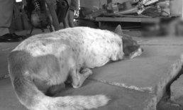 สุนัขนอนเฝ้าศพไม่ห่าง หนุ่มคลุ้มคลั่งใช้มีดปาดคอตัวเองดับสลด