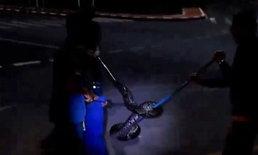 ชาวกระบี่ตะลึง! งูเหลือมยาว 5 เมตร นอนพาดยาวกลางวงเวียนศูนย์ราชการ