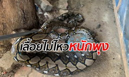 งูเหลือมบุกกรงเลี้ยงแมว 50 ตัว นอนพุงป่องเลื้อยต่อไม่ไหว ที่เหลือรอดเพราะอิ่ม
