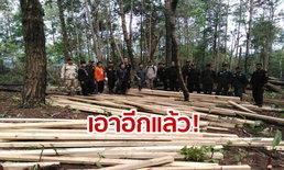 ของกลางเพียบ! เจ้าหน้าที่ยึดไม้สนป่าแปรรูปจากขบวนการตัดไม้เถื่อน