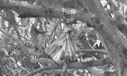 หนุ่มแฝดวัยเบญจเพสผูกคอดับใต้ต้นมะม่วง น้าช็อกเผยหลานพูดเป็นลางก่อนตาย