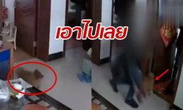 เจ้าของเงิบ หมาไม่เห่าโจรขึ้นบ้าน ดูขโมยของ-เล่นด้วยอย่างเป็นมิตร