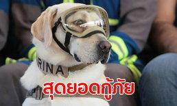 """ได้เวลาพัก! """"ฟริดา"""" สุนัขกู้ภัยเม็กซิโกชื่อดัง ปลดเกษียณหลังทำงานนานกว่า 10 ปี"""