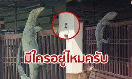 ตัวเงินตัวทองยักษ์ โผล่ปีนรั้วหน้าบ้านชาวอินโดฯ ชาวเน็ตไทยแห่แชร์-ส่องเลขที่บ้านตีเลขเด็ด