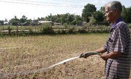 สกลนคร แล้งหนักในรอบ 30 ปี ชาวนาใช้น้ำประปารดต้นข้าว เสียเงินดีกว่าข้าวตาย