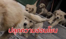 ออสเตรเลียปิ๊งไอเดีย ให้นักโทษเลี้ยงลูกสุนัขในเรือนจำได้