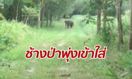 ช้างป่าขาติดบ่วงแตกตื่น วิ่งพุ่งเข้าใส่เจ้าหน้าที่ หลังพยายามช่วยเหลือ