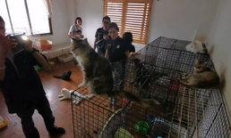 บุกคาเฟ่แมวกลางเมืองเชียงใหม่ คนร้องเรียนแมวกว่า 20 ตัว ถูกปล่อยผอมโซ