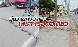 หลบหน่อยจะข้าม! งูเหลือมยักษ์โผล่เลื้อยถนนสุขุมวิท รถพร้อมใจกันเบรก