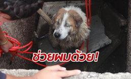 หมาตาบอดเดินร่วงตกท่อน้ำ เห่าหอนร้องให้ช่วย ตากแดดตากฝนมา 2 วัน