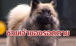 เจ้ากุชชี่ สุนัขฮีโร่ ช่วยเจ้าของรอดตาย เหตุไฟไหม้บ้านตอนกลางดึก ขณะนอนหลับ