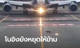 ภาพหาดูยาก หมาจิ้งจอกตัวจิ๋ว ทำเครื่องบินลำใหญ่มหึมายังต้องหยุดจอด