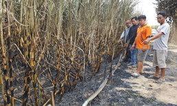 """ชาวบ้านสุดระทม """"ไร่อ้อย 300 ไร่"""" ถูกเพลิงเผาวอด เสียหายกว่า 3 ล้านบาท"""