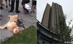 ชายใจโหด โยนหมา-แมวท้องลงจากตึกชั้น 21 ตายคู่ เหตุเพราะเมียตั้งครรภ์