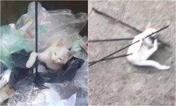 นักศึกษาจีนปี 1 ก่อวีรกรรมฉาว ใช้ธนูยิงแมวจรจัดจนตาย