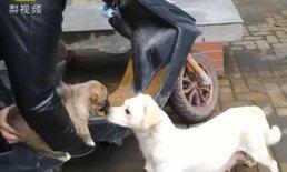 คลิปสุดซึ้ง แม่หมาจรจัดจูบลาลูกน้อย ได้คนใจดีรับไปเลี้ยง