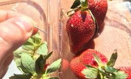ซูเปอร์มาร์เก็ตที่ออสเตรเลีย ประกาศเลิกขายเข็มเย็บผ้า หวั่นใช้สอดไส้ผลไม้อีก