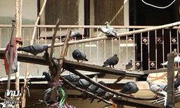 """""""ลุงพิราบ"""" ฉะคนสั่งงดให้อาหารนก ท้าจับจะอารยะขัดขืน ส่วนป้าคู่หูยอมเลิก"""