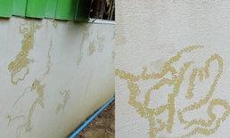 """ชาวบ้านอ่างทองแห่ขอเลขเด็ด หลังพบ """"รอยพญานาค"""" บนฝาบ้านริมแม่น้ำเจ้าพระยา"""