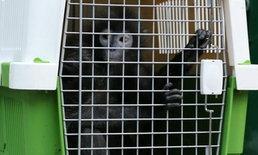 สัตว์จากสวนสัตว์เขาดิน ทยอยเดินทางถึงสวนสัตว์ขอนแก่นแล้ว