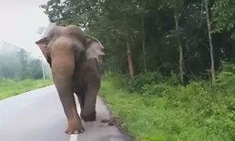 ศึกช้างชนช้าง! อุทยานแห่งชาติแก่งกระจาน เตือนประชาชนระวังช้างป่าตกมัน