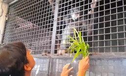 """สั่งอายัดทันควัน """"ชิมแปนซีแคระ"""" ห้ามคุ้มครอง โผล่สวนสัตว์ดังปิ่นเกล้า"""