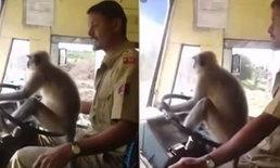 """อินเดียพักงาน! พนักงานขับรถโดยสาร เหตุปล่อย """"ลิงค่าง"""" ขับรถ"""