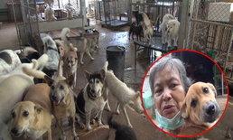 """เจ้าของบ้านพักพิงสุนัขจรจัดโอด """"ขึ้นทะเบียนหมาแมว"""" อาจทำคนทิ้งสัตว์เลี้ยงเพิ่มขึ้น!"""