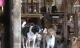 """""""ป้าจุ๊"""" บ้านพักสี่ขา เห็นด้วยขึ้นทะเบียนสัตว์ โอดมีหมากว่าพันตัว จ่าย 6 แสนไม่ไหว"""