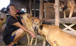 """""""หวั่นสร้างภาระ"""" คนเลี้ยงสุนัขจรจัดร้องรัฐ เลิกแนวคิดขึ้นทะเบียนหมาแมว"""