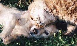 กำหนดขึ้นทะเบียน หมา – แมว รอบแรกฟรี