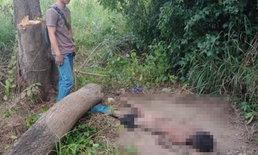 เชื่ออาถรรพ์! หนุ่มต้นไม้ล้มทับขาตายคาที่ พบรอยตะเกียกตะกาย-ดินอุดปาก