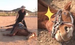 ทักษะเยี่ยม! ม้าหนุ่มสุดขี้แกล้ง ทำทีเป็นลมเสมอเวลาคนขึ้นขี่
