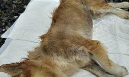 เมียแจ้งจับสามีใหม่ รับไม่ได้ทุบตีหมาตาย หวั่นลุกขึ้นมาทำร้ายคนในบ้าน