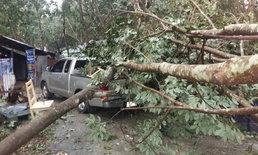ระยองยังอ่วม-พายุถล่มต้นไม้ล้มทับรถ-บ้านเรือนพังยับนับสิบครัวเรือน