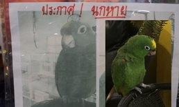 """เจ้าของประกาศหา """"นกแก้วอเมซอน"""" ราคาเหยียบแสน! ไม่สนราคาแต่มีคุณค่าทางใจ"""