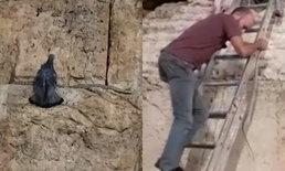 """อิสราเอลฮือฮา """"นกเขาบินหนีงู"""" ที่กำแพงเยรูซาเลม เชื่อส่งสัญญาณใกล้วันสิ้นโลก"""