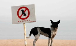 เกิดกระแสไม่พอใจ หลังจีนออกกฎใหม่ ห้ามพาสุนัขออกมาเดินเล่นตอนกลางวัน