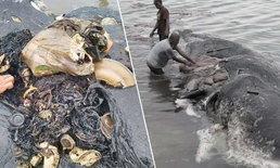ผงะ ! พบซากวาฬเกยตื้น เจอขยะพลาสติกเกือบ 6 กิโลกรัมในท้อง