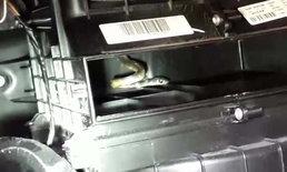 งูช่องแอร์.. สาวได้กลิ่นเหม็นโชยจากช่องแอร์รถ เรียกช่างมาดูถึงกับผงะ