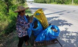 """ยายวัย 72 ปี ไม่มีที่นาทำกิน อาศัยเดินหา """"ข้าวเรี่ย"""" ที่เหลือจากการเก็บเกี่ยวประทังชีวิต"""