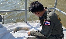 ผงะชิ้นส่วนมนุษย์ ลอยสยองคาแม่น้ำเจ้าพระยา ติดท่าน้ำหน้าวัดระฆังฯ