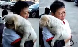 เจ้าหมาน้อยเดินทางกลับมาเจอหน้าเจ้าของ หลังพลัดพรากนาน 8 ปี (มีคลิป)
