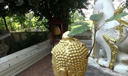 แปลกแต่จริง! ต้นโพธิ์โผล่จากเศียรพระพุทธรูป ชาวบ้านแห่ส่องหาเลขเด็ด