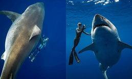 """หนึ่งในฉลามที่ใหญ่ที่สุดของโลก! """"Deep Blue"""" ฉลามขาวยักษ์โผล่นอกชายฝั่งฮาวาย"""